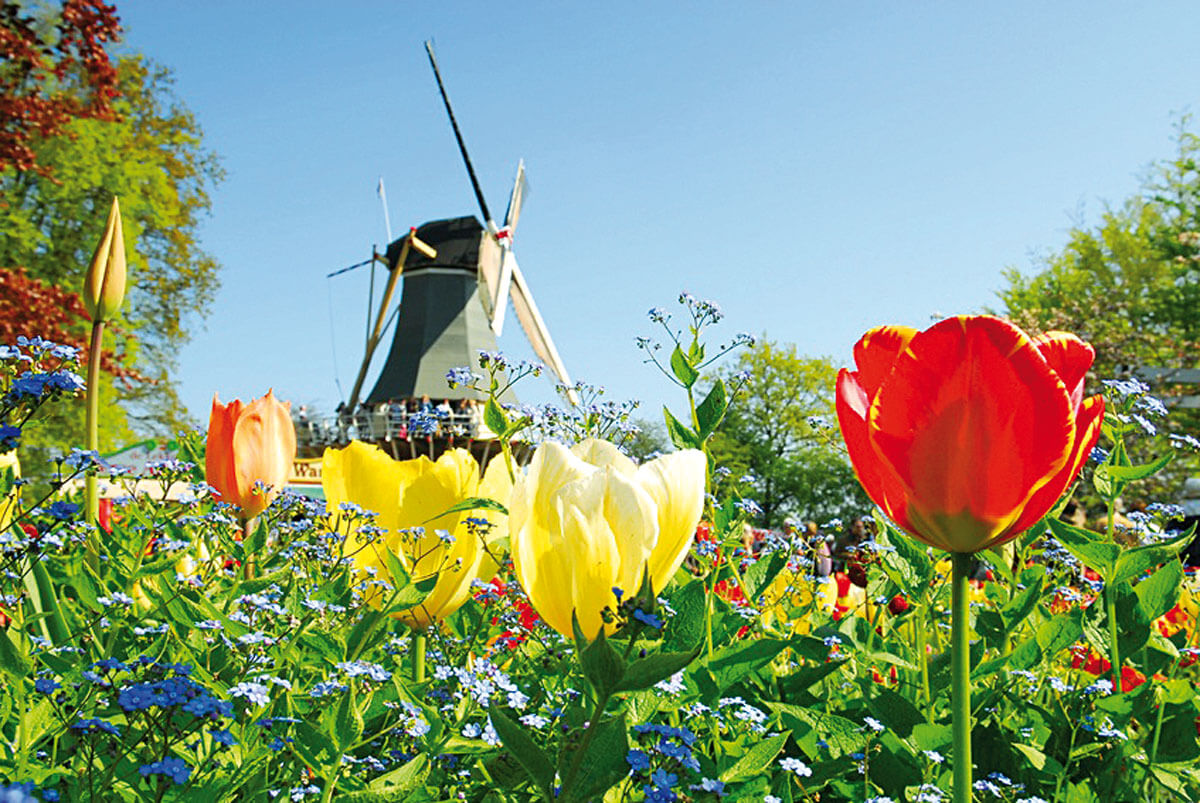 Fruehling_Holland