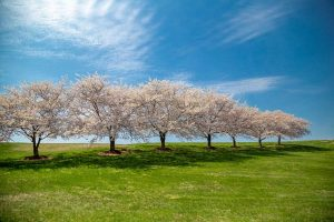 Tagesfahrten-Frühling