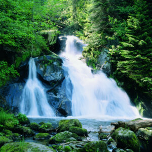 TF Triberger Wasserfälle & Sauschwänzlebahn